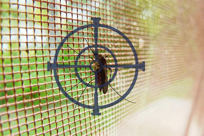 Problemas con Mosquitos. Consejos para eliminarlos